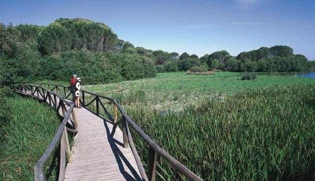 Visitas guiadas al Parque Nacional de Doñana (Huelva)