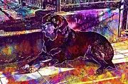 "New artwork for sale! - "" Dog Rottweiler Breed Laying Pet  by PixBreak Art "" - http://ift.tt/2ue3KGd"