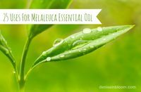 Have you ever heard of melaleuca essential oil? If not, you may know this oil by another name – Tea Tree Oil. This is just one of several names by which melaleuca oil is known.