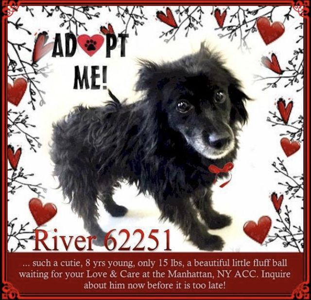 River Needs Help Nyc Dogs Foster Dog Animal Shelter