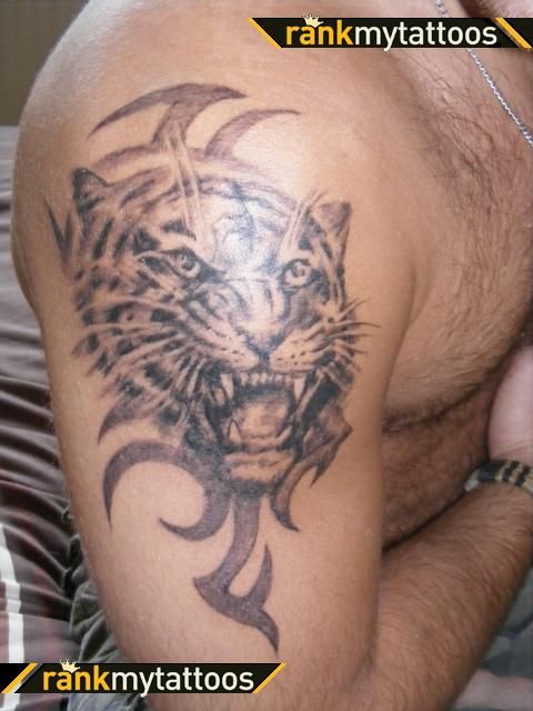 Tribal And Tiger Head Tattoo On Right Shoulder