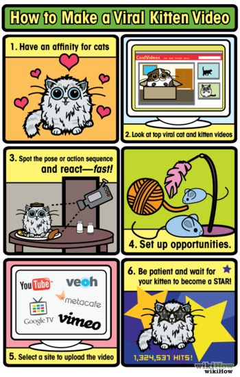 How to make a viral kitten video