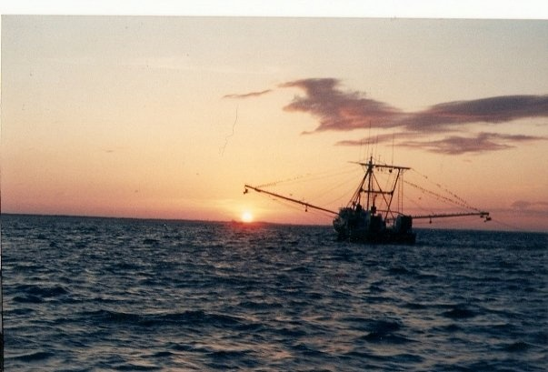 1000 images about fishing the gulf of mexico on pinterest for Gulf stream fishing