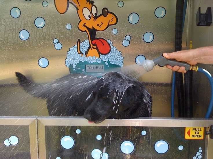 19 best evolution dog wash in action images on pinterest chili your pet will love the k9000 dog wash solutioingenieria Choice Image