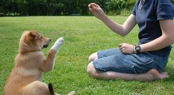 Como Adiestrar un Perro – Niveles de Adiestramiento http://www.mascotadomestica.com/adriestramiento-perros/como-adiestrar-un-perro-niveles-de-adiestramiento.html