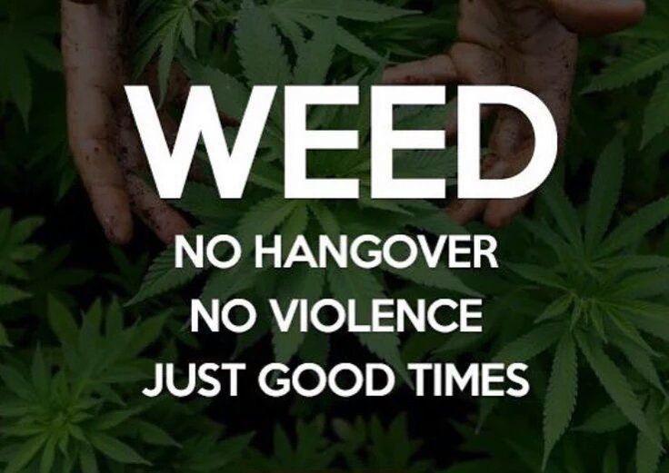 760-419-8191 Off The Wall Delivery   Carlsbad https://weedmaps.com/deliveries/off-the-wall-3 Oceanside https://weedmaps.com/deliveries/off-the-wall  #carlsbad #oceanside #sanmarcos #fallbrook #pala #vista #temecula #cannabis #delivery #organic #korova #topshelf #medicalmarijuana #cannabiscures #offthewall #weedmaps #ganga #weed #northcounty #420 #medicated #thc #cbd #edibles #kush #hightimes #marijuana #socal #cannabis #oil #cbd