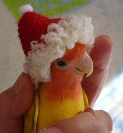 Santa wants a cracker: Witch Hats, Christmas Time, The Holidays, Santa Hats, Santa Birds, Santa Baby, Christmas Critter, Merry Christmas, Feathers Friends