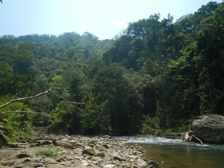 Jungle Trekking, Sumatran Ecotrek, Sumatran Ecovillage, Bukit Lawang, , Orang Utan, Ecotourism,JungleGuide, Bukit Lawang Jungle Guide, Gunung Leuser National Park, Bukit Lawang Jungle Guide, Tangkahan, Sumatera, North Sumatera, Rain Forest