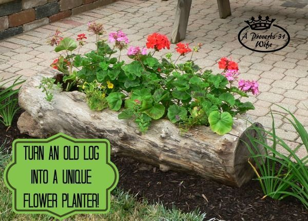 Making a log planter for flowers.