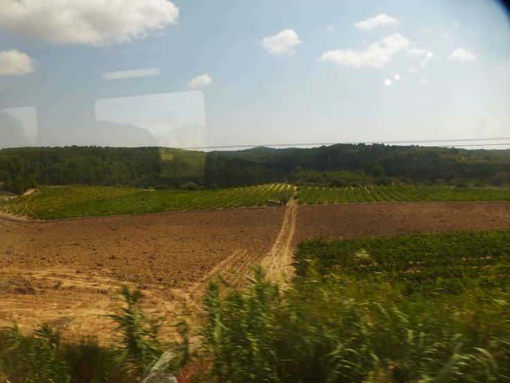 Looking out the train window at the fields of Catalunya, Spain. September, 2013.