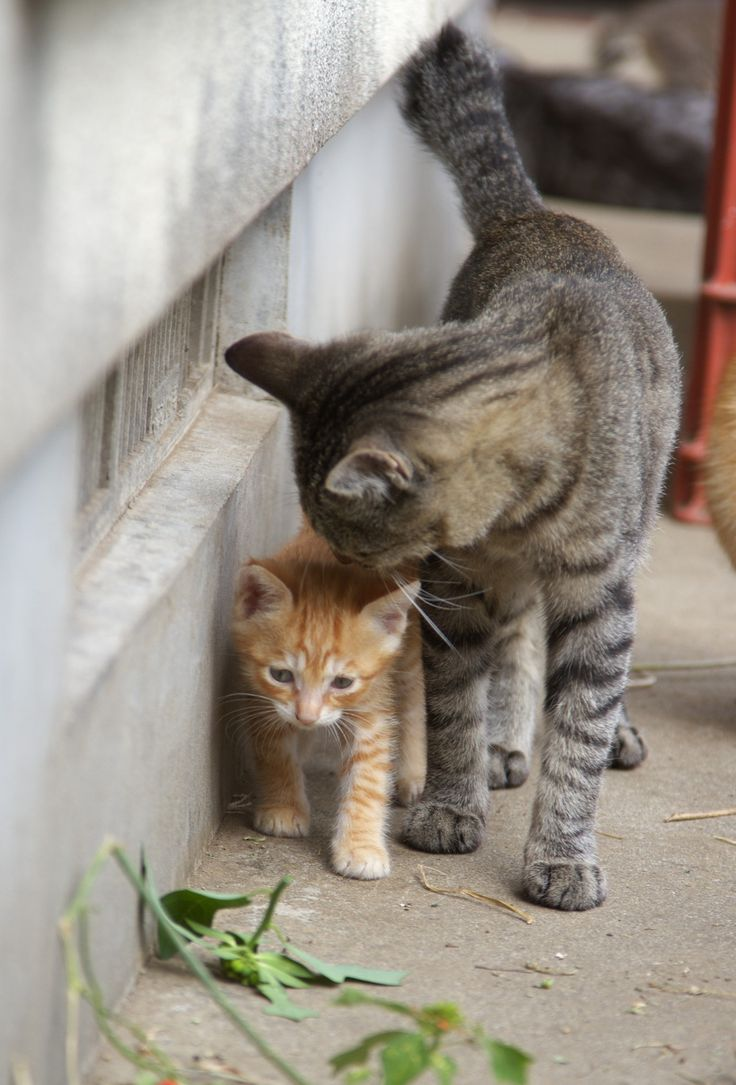 The best images about cats on pinterest cats eyes and kitty cats