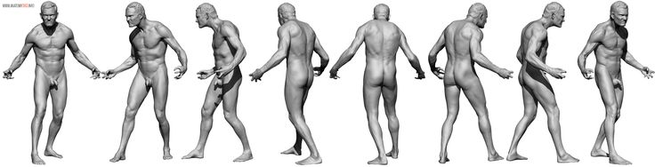 AnatomyReference_02.jpg (3529×905)