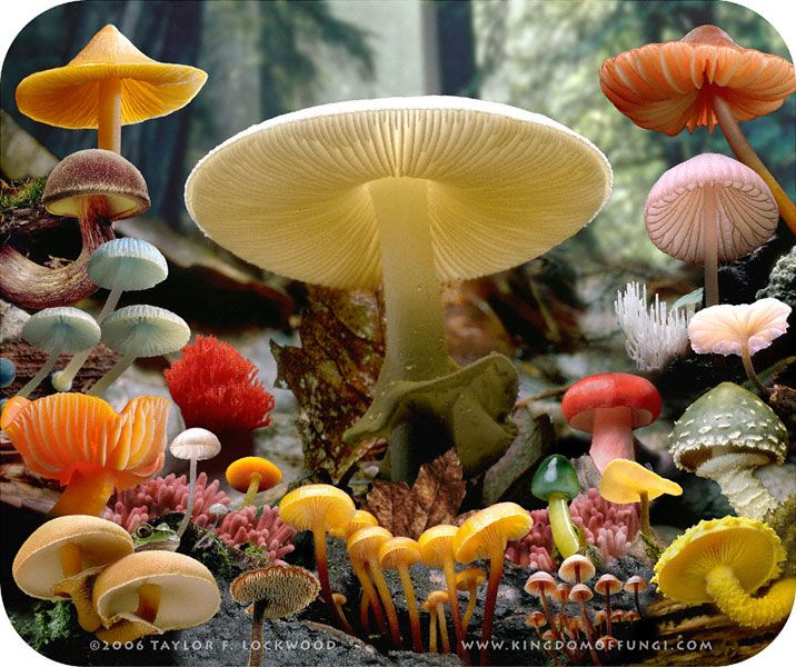colors of mushrooms