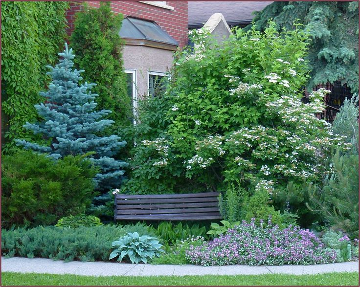The pyramidal form of blue spruce provides definition and structure to this pretty vignette.