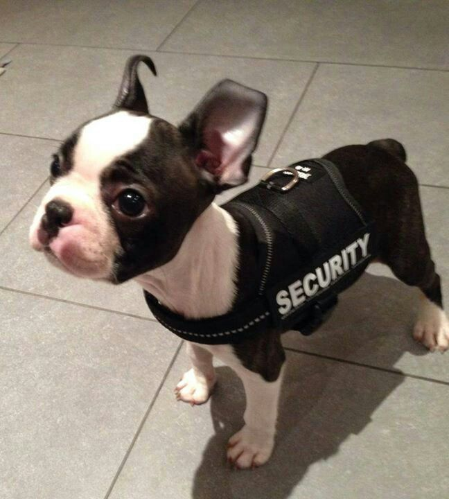 16 best Security images on Pinterest Sweatshirt, Fashion prints