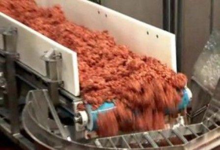 Cosa si mangia nei fast food? Un composto di ossa, budella e carne animale fracassata meccanicamente ed immersa in ammoniaca.
