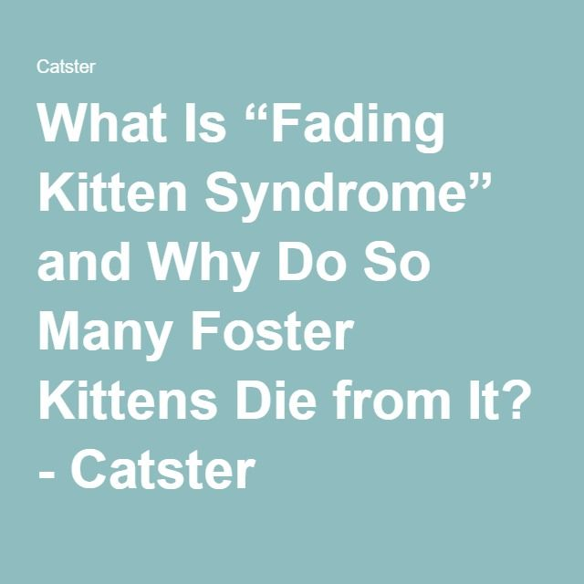 "What Is ""Fading Kitten Syndrome"" and Why Do So Many Foster Kittens Die from It? - Catster"