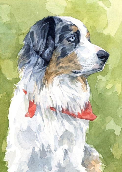 Australian Sheep Dog watercolor