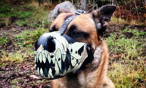 Muzzles - Working Dog Dry Goods