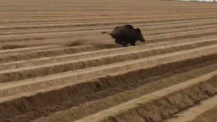 Boar? boar - GIF on Imgur