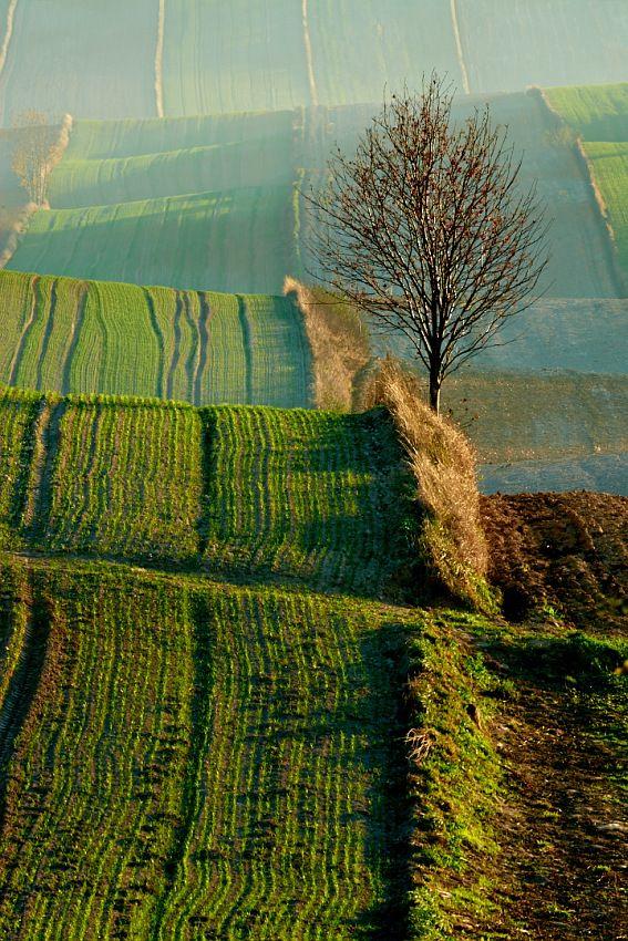 Roztocze, kraina geograficzna łącząca Wyżynę Lubelską z Podolem, wyraźnie wypiętrzony wał wzniesień, szerokości 12–32 km i długości około 180 km, przebiegający z północnego zachodu, od Kraśnika, na południowy wschód do Lwowa. Roztocze oddziela Wyżynę Lubelską i Wyżynę Wołyńską od Kotliny Sandomierskiej i Kotliny Naddniestrzańskiej.