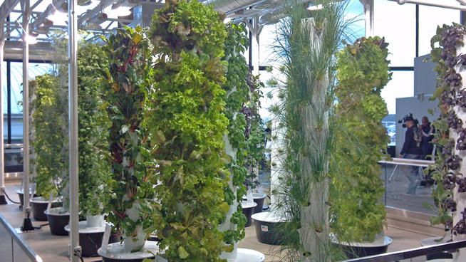 Article about chicago o 39 hare airport and their aeroponic for Grow vertical garden