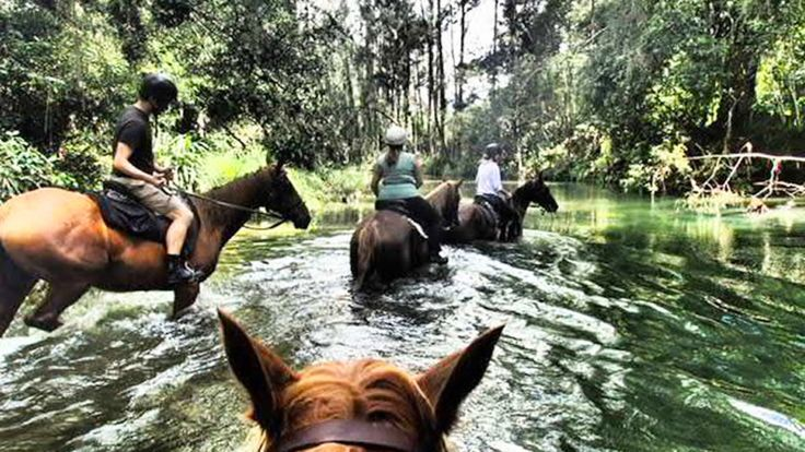 Horse Riding in Bellingen, NSW, Australia - campervan travel