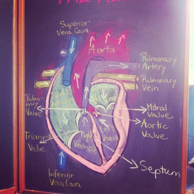 Waldorf ~ 7th grade ~ Human Physiology ~ Heart ~ chalkboard drawing