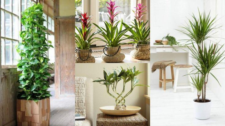 7 piante da interni, ideali per giardinieri poco esperti ...