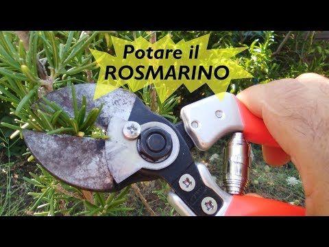 POTARE IL ROSMARINO - YouTube