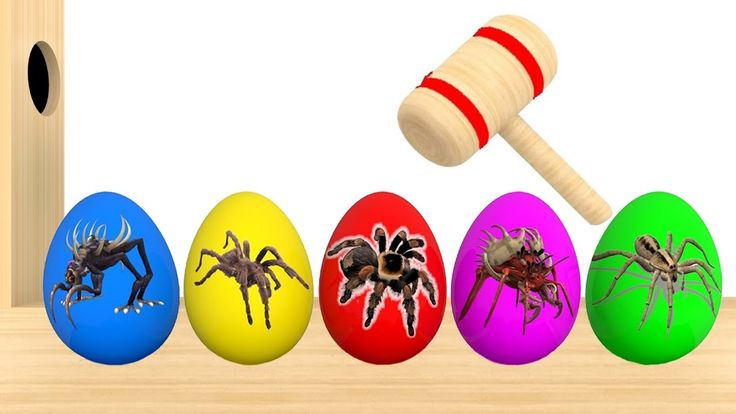 Learn Colors With Surprise Eggs Giant Spider Xylophone Hammer for Children Toddlers - Color for Kids Learn Colors With Surprise Eggs Giant Spider Xylophone Hammer for Children Toddlers - Color for Kids https://youtu.be/cv4hIb41PMA Subscribe for more Colorful Video: https://www.youtube.com/channel/UCbSuTlWs4hQSmiQb7i3MmGA?sub_confirmation=1 Learn Colors with Animal an Toilet Poop BEARDED BABY CRYING Finger Family Nursery Rhymes…
