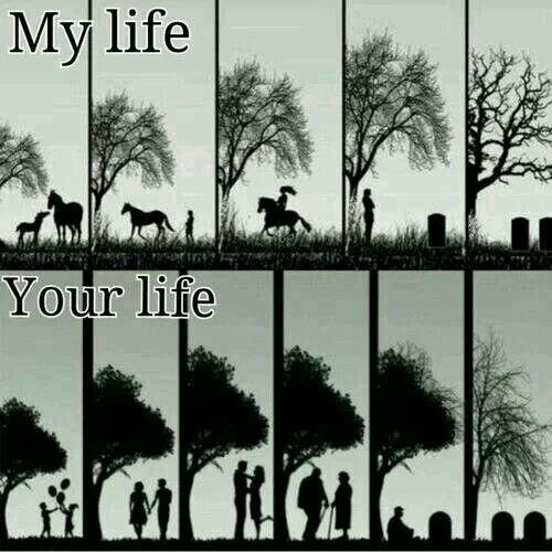 My live Your live