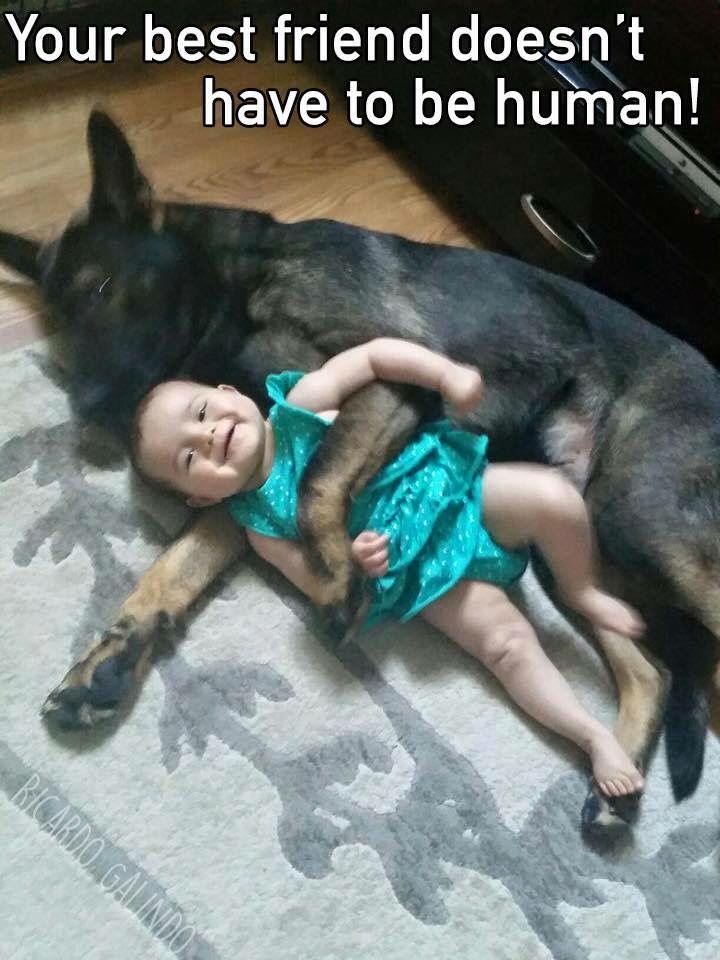 Funny Sleeping German Shepherds   ... about German Shepherd Dogs on Pinterest   Lol funny, Sleep and Bar