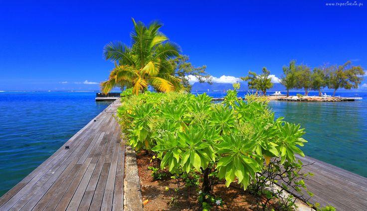 Polinezja, Francuska, Molo, Palma, Rośliny