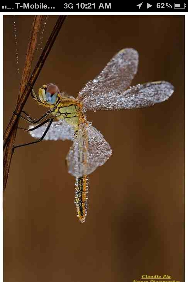 Taken from my inspiration board the glass winged dragon fly