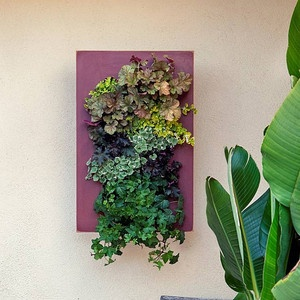 Plant Frame Country Red, $85, now featured on Fab.