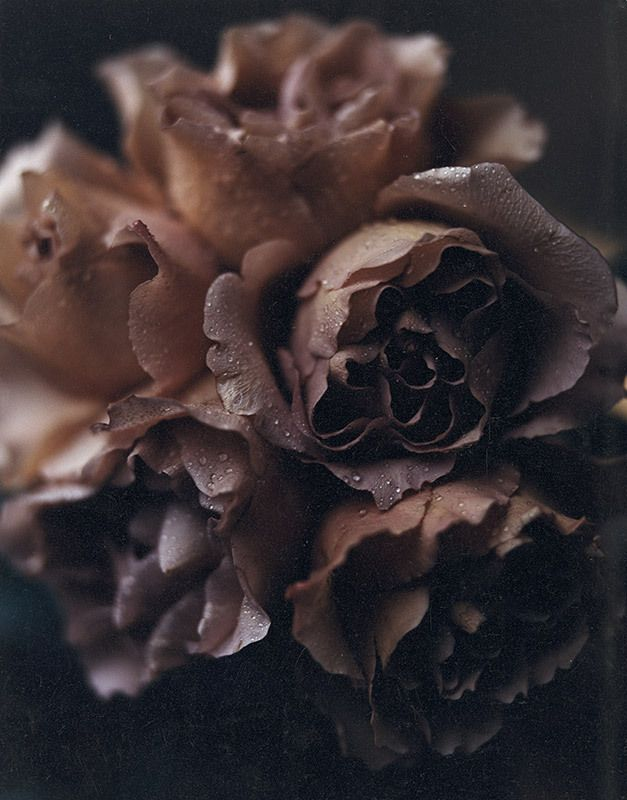 помощью коричневый цвет картинки цветы любовь уважение
