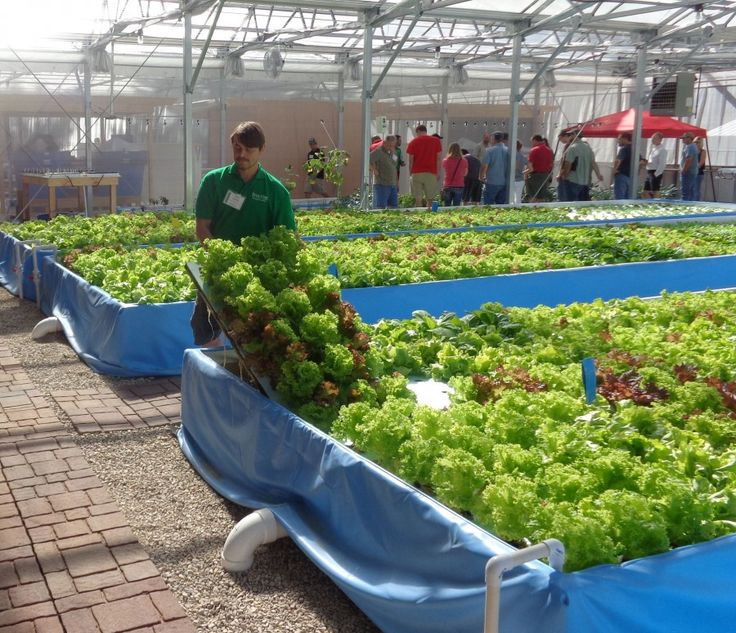 469 best images about gardening the three ponics hydro for Hydroponics aquaponics