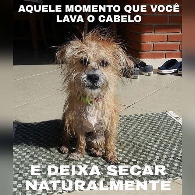 BEM ASSIM!! 😂😂🙏 #cachorroetudodebom #amoanimais #maedecachorro #cachorro #caopanheiro #petmeupet #filhode4patas #labrador #goldenretriever #shihtzu #pug #maltes #schnauzer #viralata #luludapomerania #bulldog #amocachorro