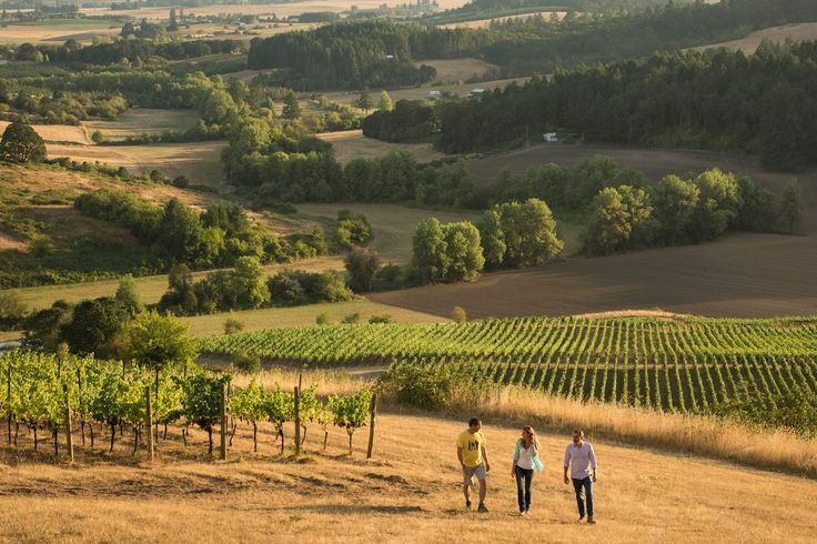 willamette valley wineries you should know about
