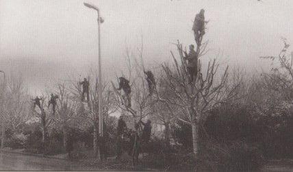 συνεργεία του Δήμου κλαδευουν τις λεύκες κατά μήκος της λεωφόρου Μεγάλου Αλεξάνδρου. Ενα   ονειρικό στιγμιότυπο του φωτογράφου Μιχάλη Παππού