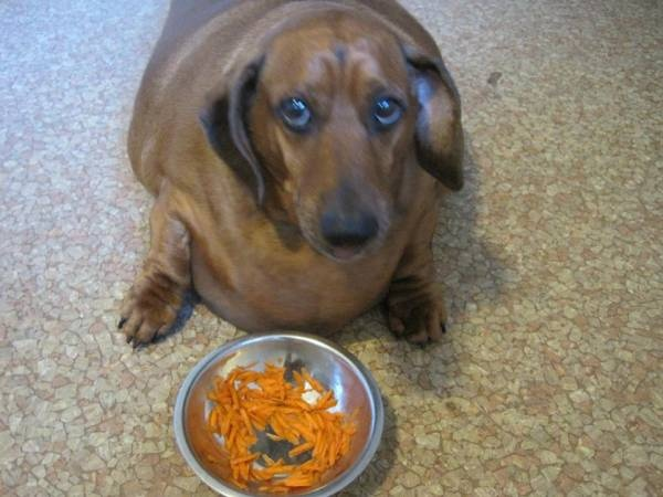 Can Dogs Eat Carrots Yahoo