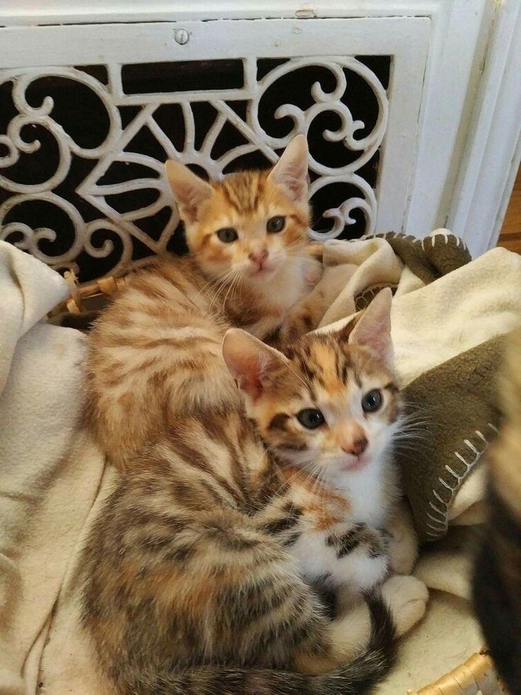 Cats of Joel
