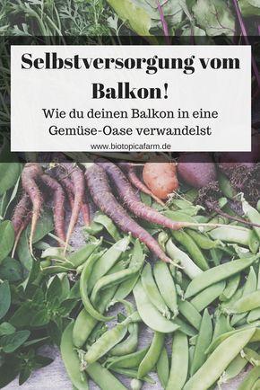 Mit diesen Tipps erschaffst Du Dir ein kleines grünes Paradies mitten in der Großstadt und versorgst Dich noch dazu selbst mit Gemüse & Kräutern!