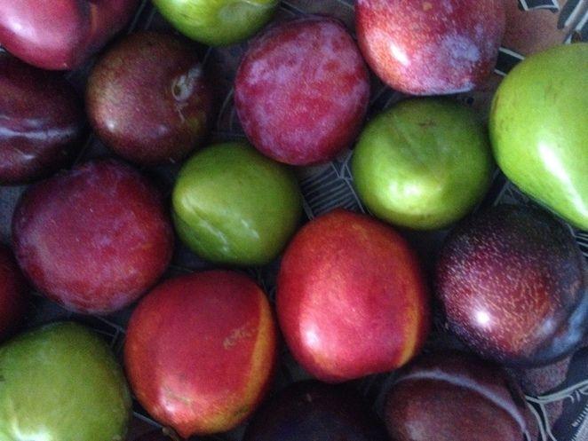 fruit, loop, kalamunda, pickering brook, fresh, seasonal, shed, orchard