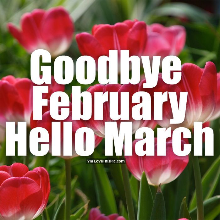 Goodbye February, Hello March march hello march march quotes hello march quotes goodbye february hello march images welcome march welcome march quotes march image quotes goodbye february hello march