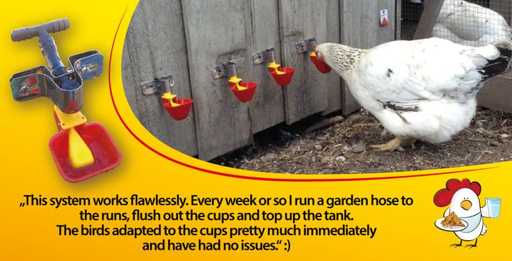 dinea-a-chook-testimonial5.png#chickens feeders #hens #eggs #feeders #homesteading #farmers #drinkers #Townsville #shop #Mealworms #chickens  #PoultryFarming