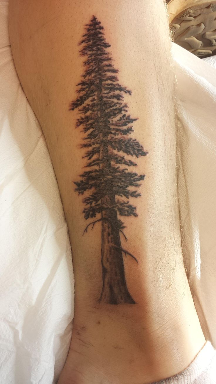 Redwood by Matt Sager, Th'ink Tank Tattoo, Denver, CO