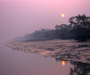 Sundarbans mangroves Le plus grand de son genre, les Sundarbans mangroves est un labyrinthe de 4.000 mile carré des zones humides au confluent du Gange, du Brahmapoutre et Meghna limitrophes Bangladesh et en Inde. C'est également le tigre indien rare, singularités telles que le poisson accrobranche, et plus de deux millions de personnes.