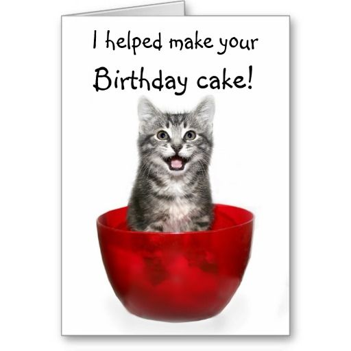 17 Best Images About Cat Birthday Cards On Pinterest